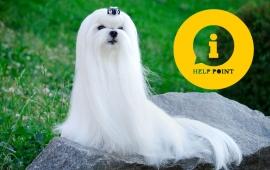 Malteser Hunde Preis Mini Malteser Im Tiermarkt Von Deinetierwelt